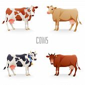 picture of calf cow  - Different cows colors set - JPG