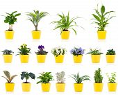 stock photo of house plants  - Set of green house plant - JPG