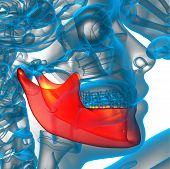 image of mandible  - 3d rendered illustration  - JPG