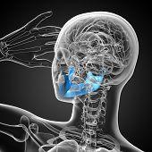 stock photo of jaw-bone  - 3D medical illustration of the jaw bone  - JPG