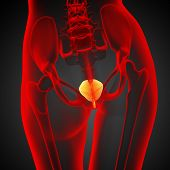 foto of bladder  - 3d render medical illustration of the bladder  - JPG