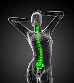 foto of lumbar spine  - 3d render medical illustration of the human spine  - JPG