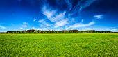 stock photo of serenity  - Panorama of summer meadow pastoral idyllic serene scene - JPG