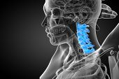 image of spines  - 3d render medical illustration of the cervical spine  - JPG
