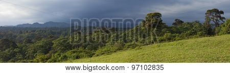 180 degree panorama of cloud forest on the slopes of Mt Kenya