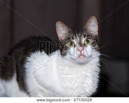 White And Tabby Cat On Dark