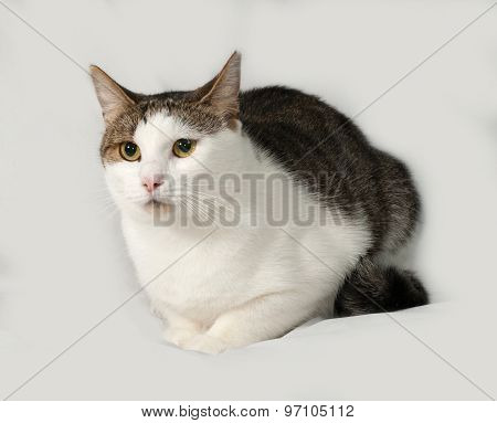 Tabby And White Cat Sitting On Gray