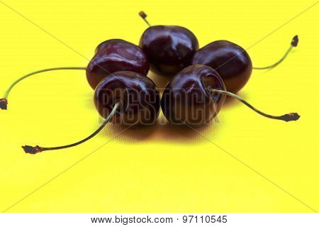 five sweet cherries on yellow background, close-up