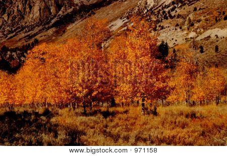 Aspen Grove 2