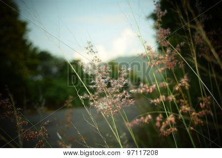 Close up Wayside grass flower retro vintage style