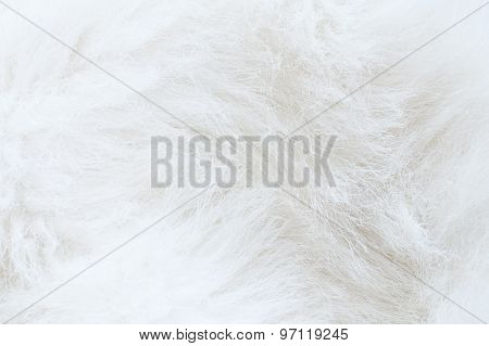 Close Up Of White Fur - Textured Background
