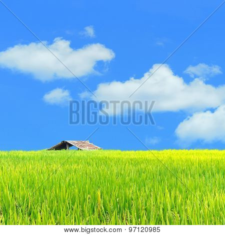 Scenery Meadow Viewpoint And Green Paddy Rice Field For Background