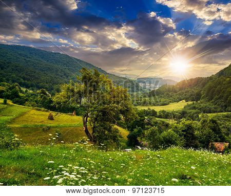Tree On Agricultural Field In Mountains At Sunset