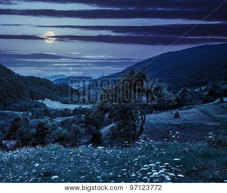 Tree On Agricultural Field In Mountains At Night
