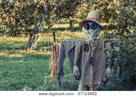 A farm scarecrow in an apple orchard.  With an antique tone effect.