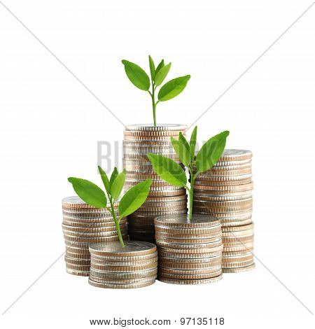 Silver Thailand Coins Stack Isolated And Green Treetop.