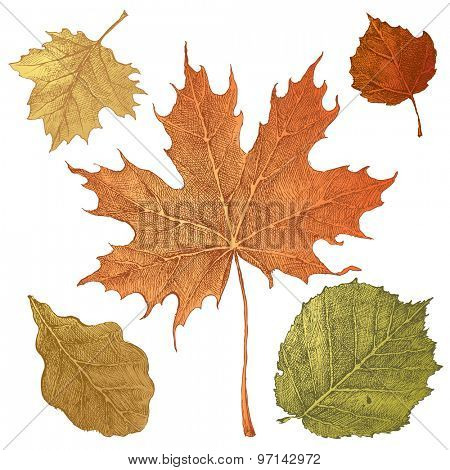 5 hand drawn autumn leaves on white background