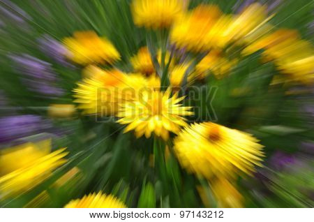 Abstract yellow strawflower with motion blur