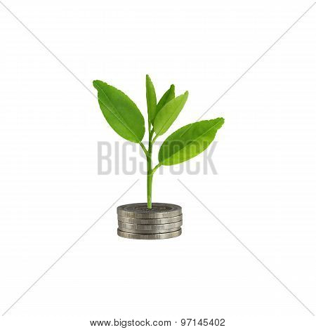 Silver Coin Stack And Treetop In Concept Of Growth.