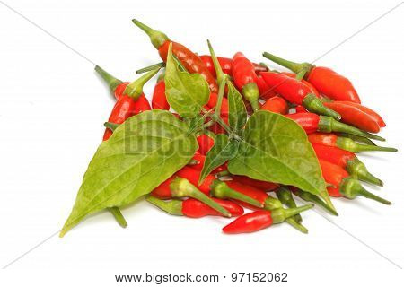 Red Chili Pepper With Leaves Isolated (select Focus )