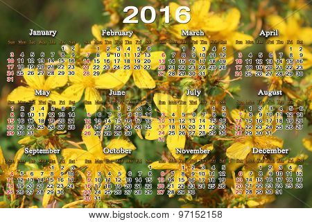 Calendar For 2016 With Yellow Flowers Of St.-john's Wort