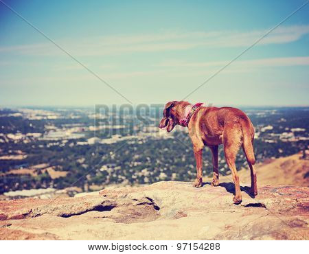 a dog sitting on a mountain top looking over a skyline toned with a retro vintage instagram filter