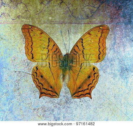 Butterfly background image