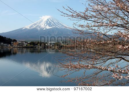 Mount Fuji And Sakura Not Blossom.