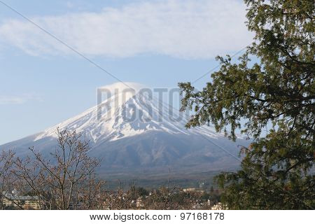 Stalk Of Tree And View Of Mount Fuji.