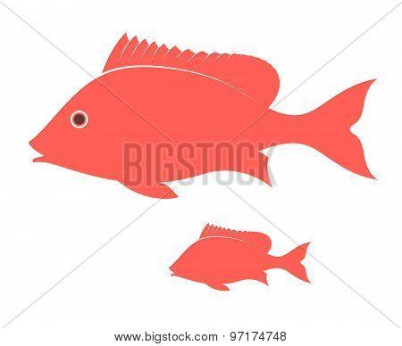 Crimson snapper