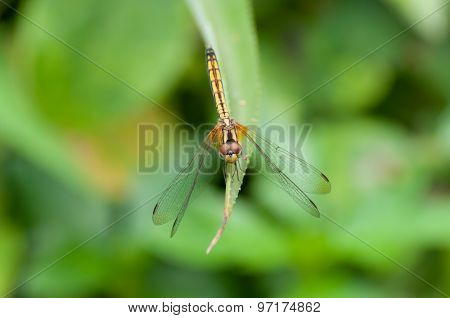 Dragonfly On A Leaf.