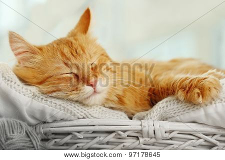 Red cat resting indoors