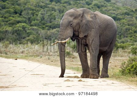 Elephant On The Edge Of A Gravel Road