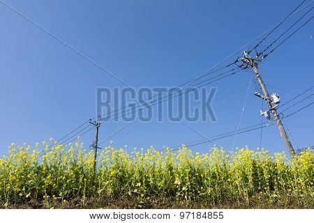 Cole field and electric wire