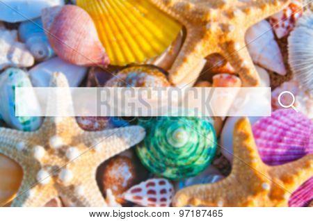 Beach life shot sea shell starfish Concept