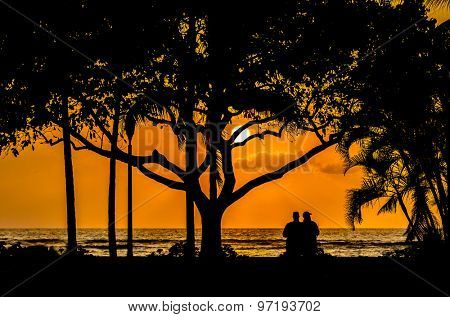 Palm and tropical trees silhouette on sunset tropical beach.