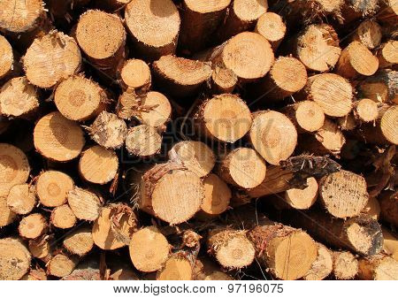 Pine Timber Logs.