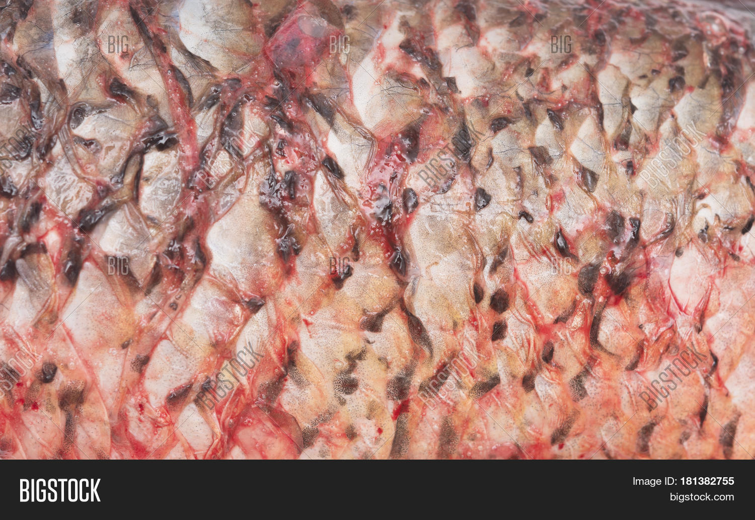 Image fish skin without scale image photo bigstock for Fish without scales
