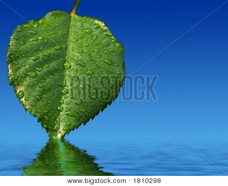 Leaf And Reflection