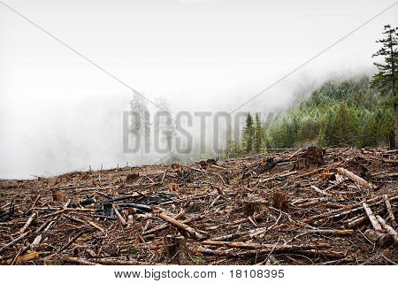 Clear Cut Logging