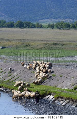 The Shepherd Conducts Herd Of Sheep On A Watering Place To The River Against A Peace Rural Landscape
