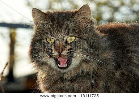 Cat's emotional behavior