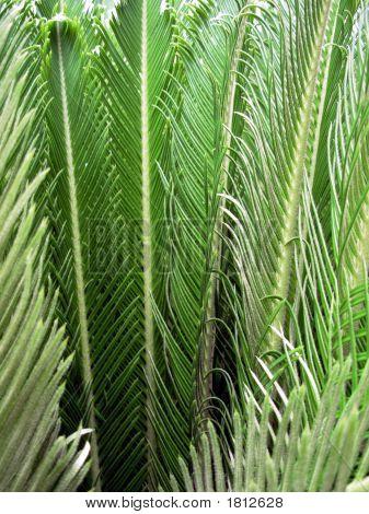 Palmleafbkgd