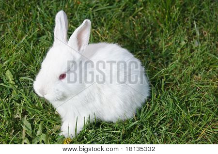 Frontal View Of White Bunny
