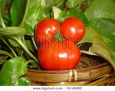 Tomate de Minnie Mouse