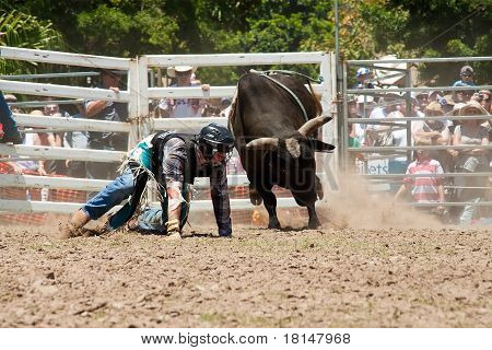 Cowboy Run Away From Dangerous Bull On Australia Day Rodeo Festival