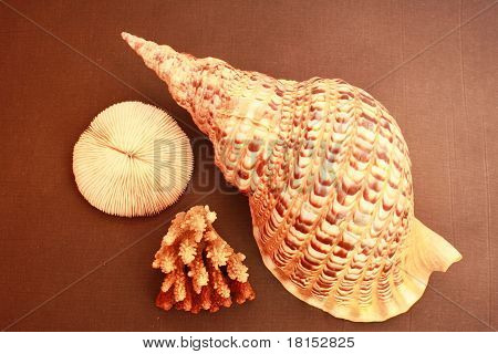 Shell And Coral