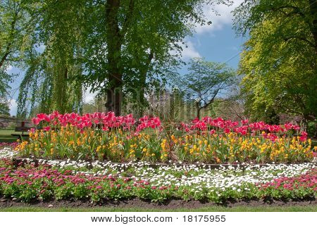 Red Tulips And Willow Tree