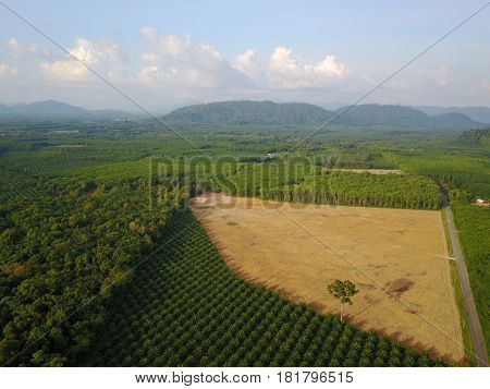 Deforestation environmental damage. Aerial drone view. Rain forest destroyed to make way for oil palm plantations
