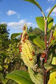 pic of winnebago  - A group of Milkweed bugs  - JPG